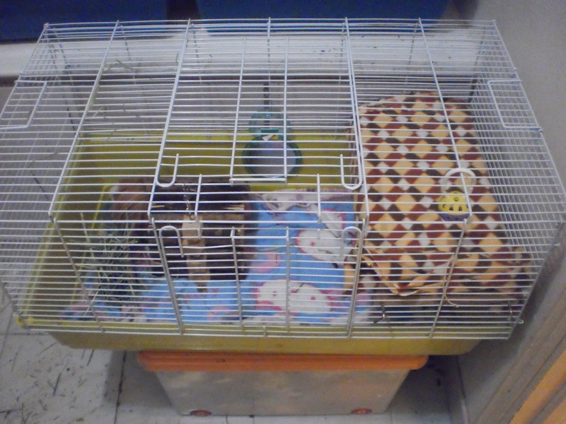 Housing for How to build a guinea pig cage out of wood